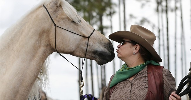 Cattle drive draws focus to Florida's cowboy history