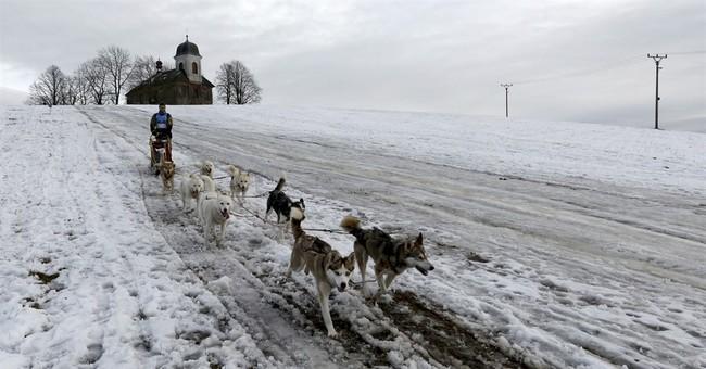 Warm weather cuts short tough Czech dogsled race