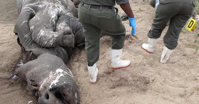 In South Africa, top US official sees poached rhino