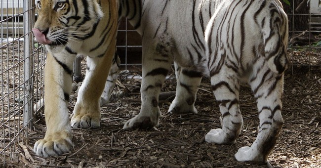 Q&A: What's changed since exotic animals let loose in Ohio