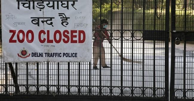 New Delhi zoo closed temporarily after birds die of bird flu