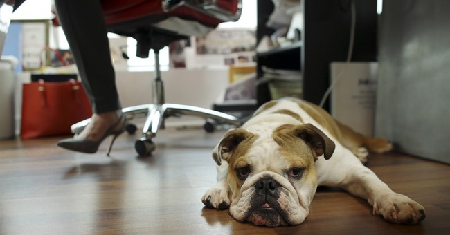 Pets at work may help atmosphere - but bring their own risks