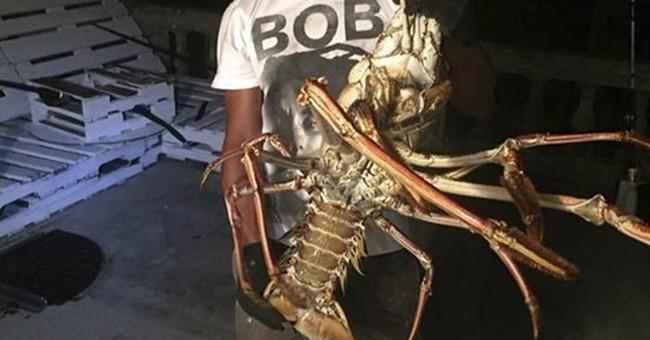 Fisherman reels in whopper of a lobster in Bermuda