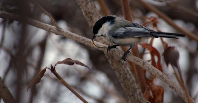 Long, curved, akimbo: Hope uncovered for bird beak deformity