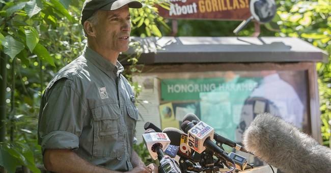 Zoo: Gorilla's death drew attention, didn't hurt attendance
