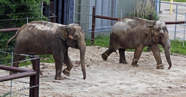 Former Seattle zoo elephant found dead