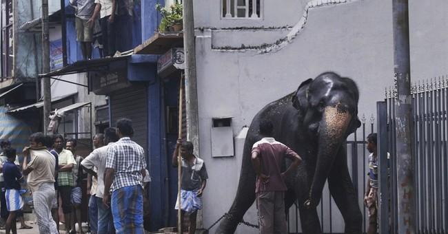 Sri Lanka cracks down on owners of elephants taken from wild