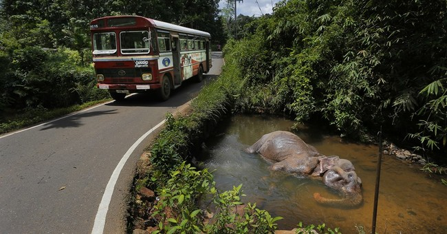 Sri Lanka cracks down on owners of elephants taken from wild