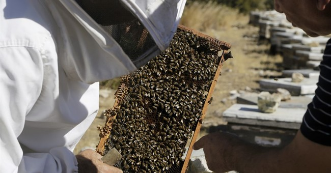 Beekeepers shun island divide to breed Cyprus' own queen bee