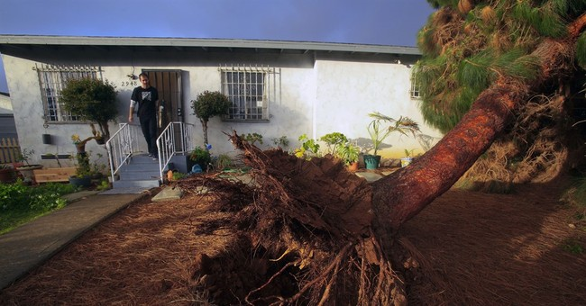 1 killed by fallen tree as wet winter storm hits California
