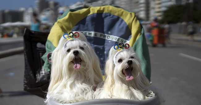 Brazilian pets parade in their own 4-footed Carnival