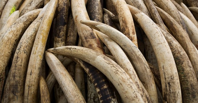 Famous pool-cue maker sentenced in attempted ivory smuggling