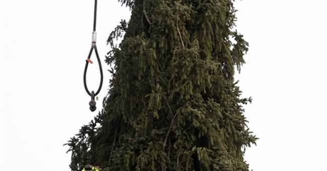 Rockefeller Center Christmas tree cut in upstate New York