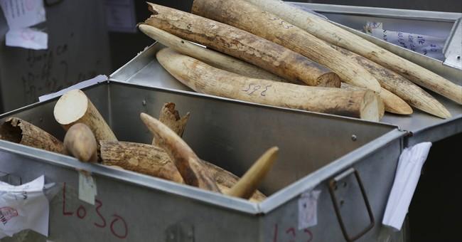 Vietnam destroys huge pile of seized ivory, rhino horns