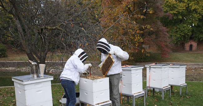 Cemetery beekeeping, honey operation buzzes among graves