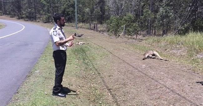 Group: Australian driver deliberately killed 17 kangaroos