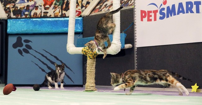 Four-legged fur balls take to the field in Kitten Bowl III
