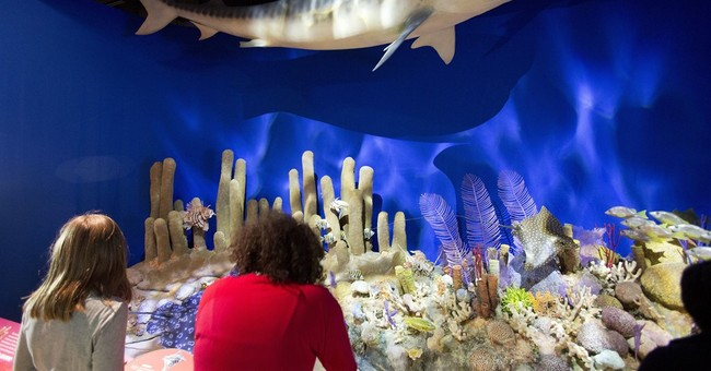 American Museum of Natural History to host Cuba exhibit