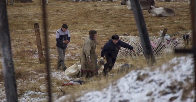 Expanded reindeer cull arouses fear, suspicion in Siberia