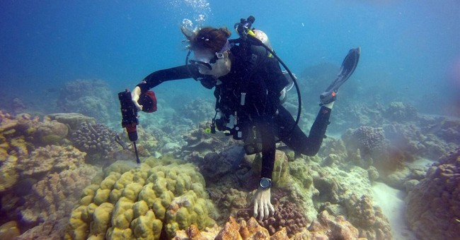 In graveyard of dead coral in Pacific, hope and life bloom
