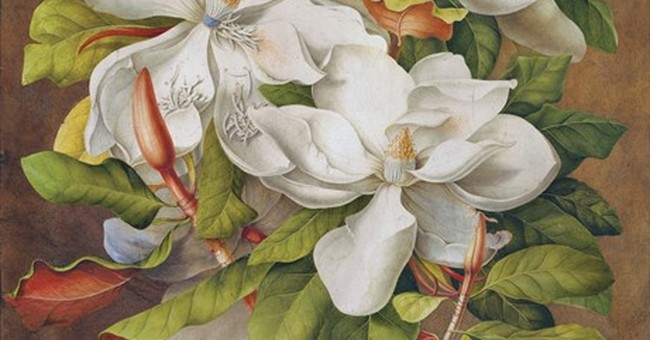 Exhibit offers rare glimpse at Bunny Mellon's botanical art