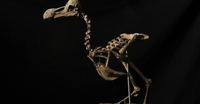 Auction House sells Dodo skeleton for $416,300