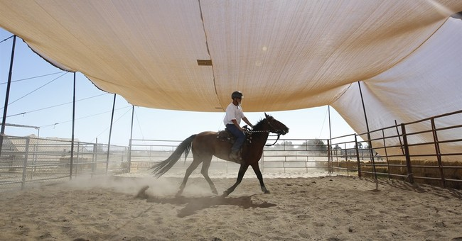 'They're a lot like us': Program pairs inmates, wild horses