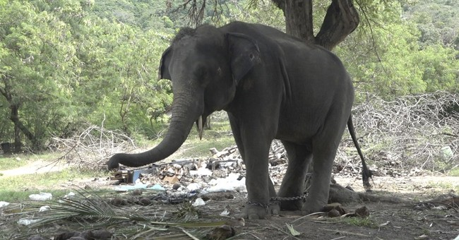 Thai elephant gores Scottish tourist to death on trek