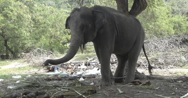 Thai elephant gores Scottish tourist to death on trek