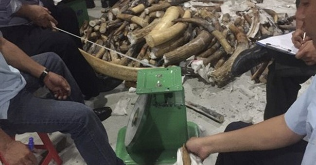 Vietnam seizes smuggled ivory hidden with wax, wood nails