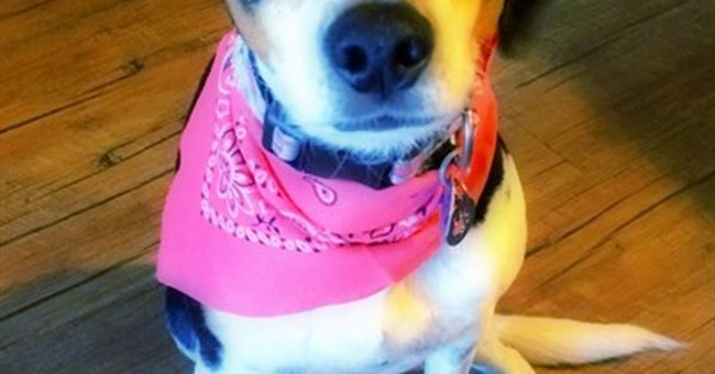 Mexican airline loses dog, launches FindMika campaign