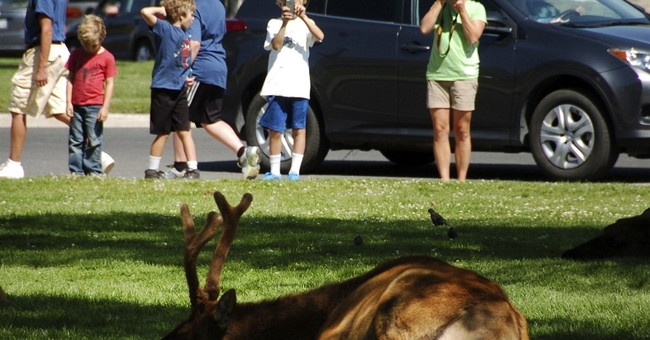 Yellowstone braces for more crowds after 2 years of records