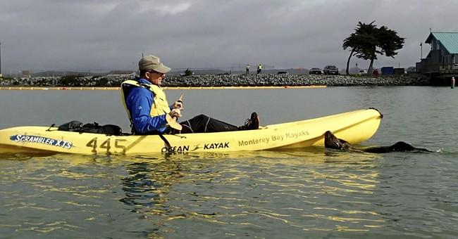 Friendly otter jumps onto kayak, joins birthday celebration