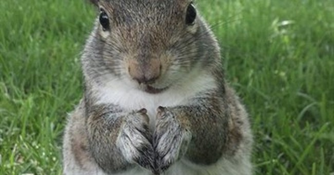 Campus critters are nuts for Penn State's 'Squirrel Girl'