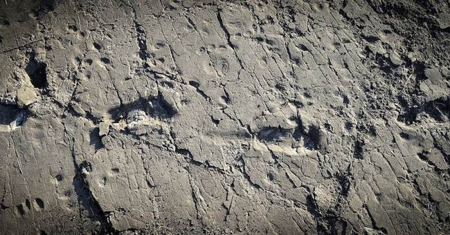 Ancient human ancestor was one tall dude, his footprints say