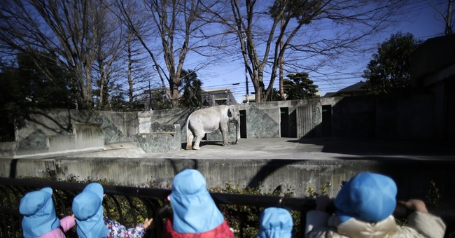 Move sought for Japan's oldest elephant may be too late