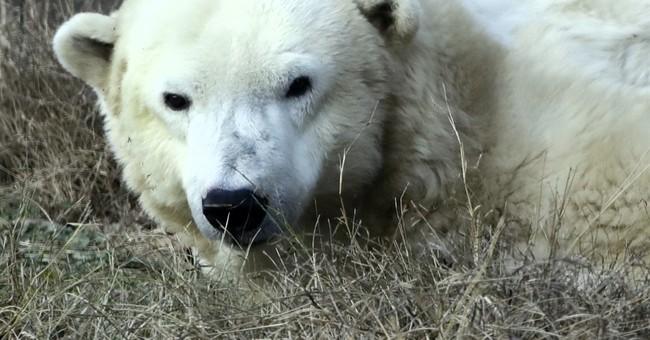 America's oldest polar bear celebrates chilly birthday
