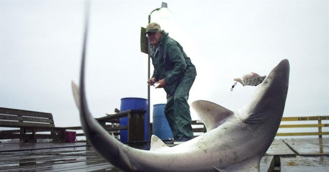 Plan for imperiled shark doesn't please all conservationists