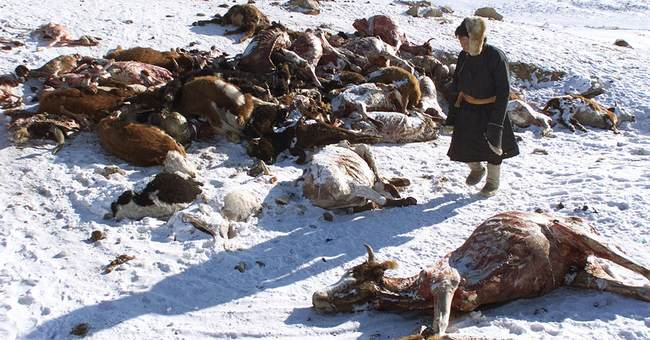 Aid groups warn of crisis as Mongolia hit by harsh winter