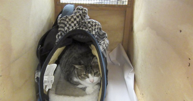 Canadians sent home for trying to sneak cat into New Zealand
