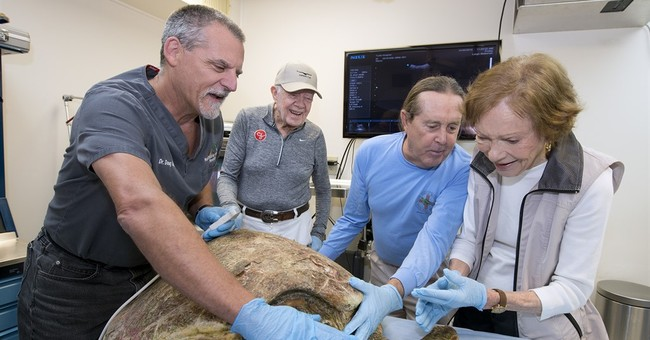 Former President Carter helps release rehabbed sea turtle