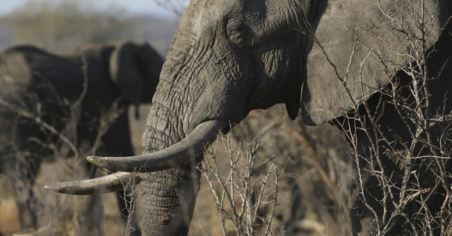 China says it will shut down ivory trade by end of 2017