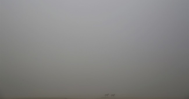 Thick fog shrouds Dubai ahead of New Year's Eve fireworks