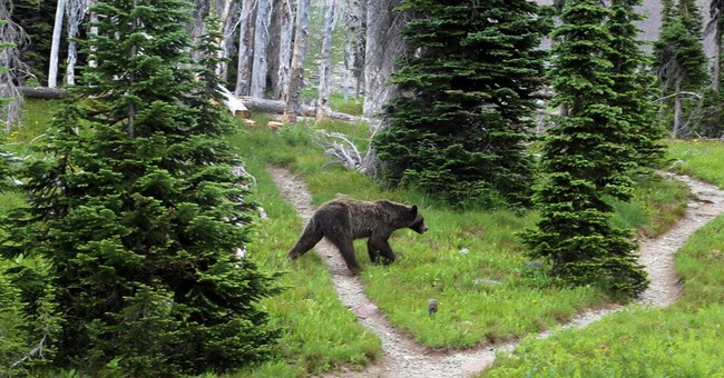 APNewsBreak: States divvy up Yellowstone-area grizzly hunt