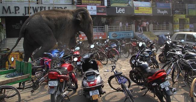 Image of Asia: Elephant's wild visit to Indian town stopped