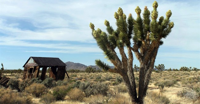 The Latest: Obama move protects 1.8m acres of Calif. desert