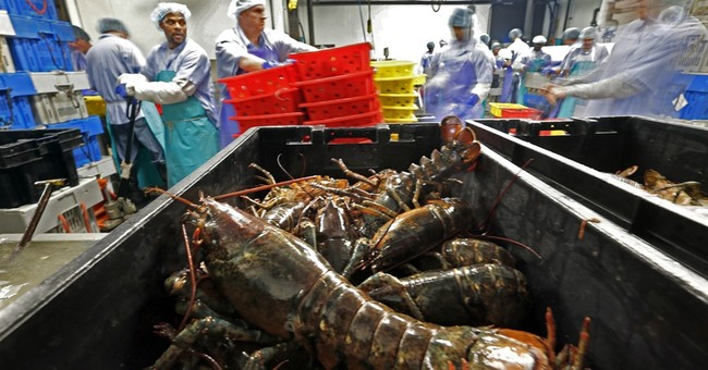 Americans sending less lobster to Canada as processing grows
