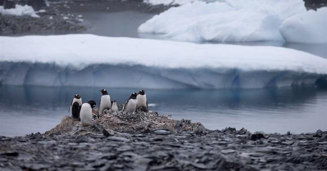 Antarctica study: Iceberg nearly erases penguin population