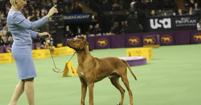 Many dog breeds yearn for 1st Westminster best in show