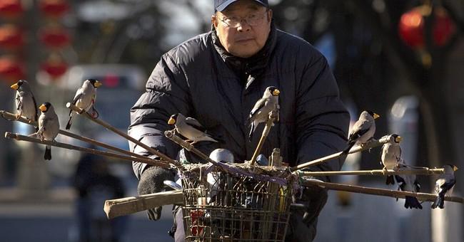 Image of Asia: Taking songbirds on a bike ride in Beijing